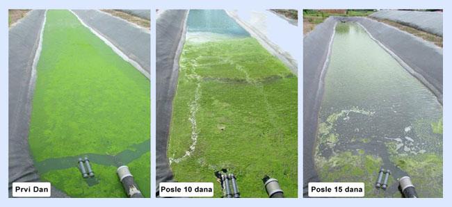 područja primene ultrazvuka za kontrolu algi i biofilma